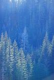 высокогорная пуща Стоковые Фото