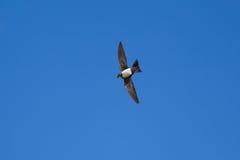 Высокогорное стремительное в голубом небе Стоковые Изображения RF