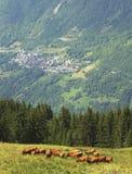 высокогорное французское село Стоковые Изображения