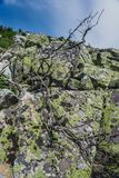 Высокогорные луга Taganay Стоковая Фотография RF
