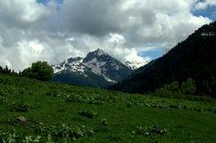 высокогорные лужки Стоковая Фотография