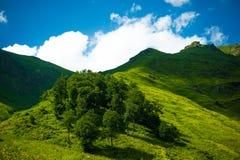 высокогорные лужки Стоковое Фото
