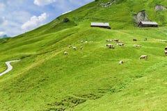 Высокогорный ландшафт гористой местности, Grindelwald - Швейцария стоковая фотография rf