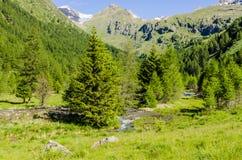 Высокогорный ландшафт луга высоких гор на ясном лете, солнечном дне. Стоковые Изображения