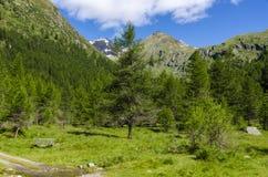 Высокогорный ландшафт лужка высоких гор на ясном лете, солнечном дне. Стоковое фото RF