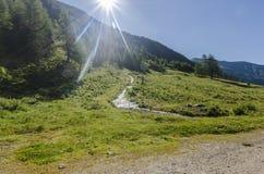 Высокогорный ландшафт лужка высоких гор на ясном лете, солнечном дне. Стоковое Изображение RF