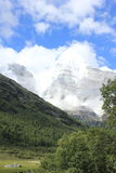 высокогорный ледник и лес Стоковое Фото
