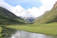 высокогорный ледник и злаковик Стоковая Фотография
