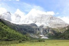 высокогорный ледник и злаковик Стоковое Изображение