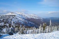Высокогорный ландшафт с покрытыми снег елевыми деревьями стоковые фото