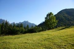 высокогорный лужок Стоковая Фотография