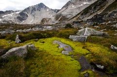 Высокогорный мох, Pemberton, Британская Колумбия Стоковая Фотография RF