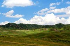 Высокогорный пейзаж злаковика на плато Цинхая Тибета Стоковое фото RF