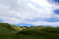 Высокогорный пейзаж злаковика на плато Цинхая Тибета Стоковая Фотография
