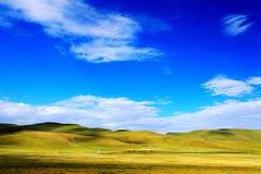 Высокогорный пейзаж злаковика на плато Цинхая Тибета Стоковые Фото