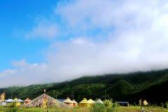 Высокогорный пейзаж злаковика на плато Цинхая Тибета Стоковое Фото
