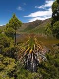 высокогорный пейзаж национального парка mt поля Стоковые Изображения