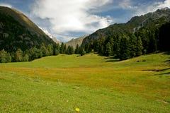 Высокогорный луг в горах Кавказа Стоковая Фотография