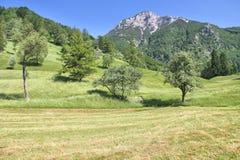 Высокогорный луг около Tolmin, Словении Стоковое Изображение RF