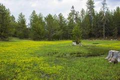 Высокогорный луг Carpeted в Wildflowers Стоковое фото RF