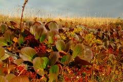 высокогорный лужок Крупный план травы с солнечными лучами красивейшая природа ландшафта Стоковое Изображение