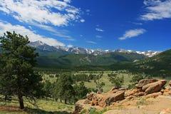высокогорный avens на национальном парке утесистой горы Стоковое Изображение