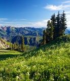 высокогорный greenery Стоковые Фото