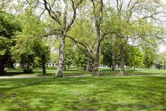 2 высокого дерева рядом с малым холмом Стоковое фото RF