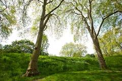 2 высокого дерева рядом с малым холмом Стоковое Изображение