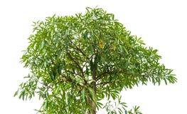 высокое высокое дерево Стоковые Изображения
