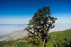 Высокое дерево на горе Стоковое Изображение RF