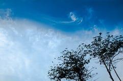 Высокое дерево на голубом небе и возбуждает bakground облака стоковые фотографии rf