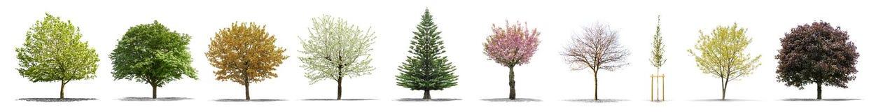 Высокое дерево собрания определения изолированное на белой предпосылке Стоковое Изображение RF
