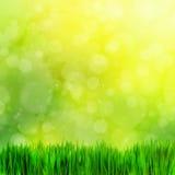 Высокое изображение разрешения свежей зеленой травы, нерезкости природы Стоковые Изображения RF