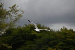 высокое небо летая Стоковое Фото