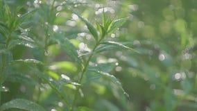 Высококачественное видео моча сада, цветков, кустов видеоматериал