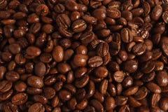 Высокомарочные свежие зажаренные в духовке кофейные зерна Стоковая Фотография