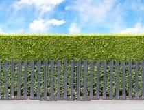 Высокорослая изгородь куста с черной деревянной загородкой Безшовное бесконечное patte стоковые изображения