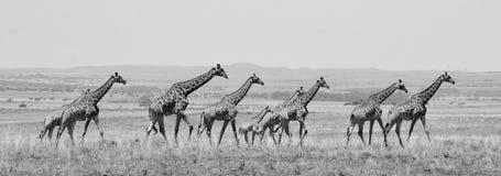 Высокорослая семья стоковое фото rf
