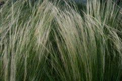 Высокорослая трава ландшафта Стоковое Изображение RF