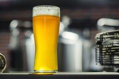 Высокорослое стекло светлого пива в винзаводе Стоковая Фотография RF