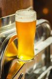 Высокорослое стекло светлого пива в винзаводе Стоковое фото RF