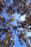 высокорослые валы Стоковая Фотография