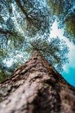 Высокорослые деревья горы в Испании стоковая фотография rf