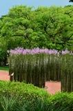 Высокорослые прямые заводы с фиолетовыми цветками на садах Сингапура ботанических стоковое изображение rf