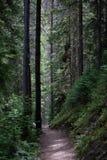 Высокорослые темные деревья в лесе национального парка скалистой горы стоковое изображение