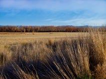 Высокорослые травы от ноября стоковая фотография rf