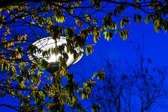 Высокорослый поляк с светом на верхней части; уличный свет стоковое изображение rf