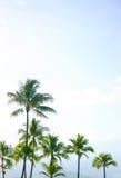 высокорослый тимберс Стоковые Фото