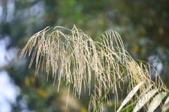 Высокорослый тростник стоковое фото